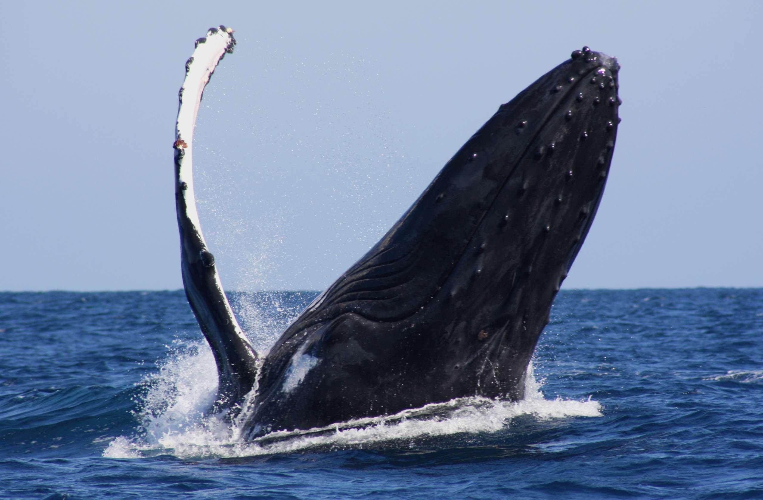 Rencontre de mammifères marins en croisière plongée