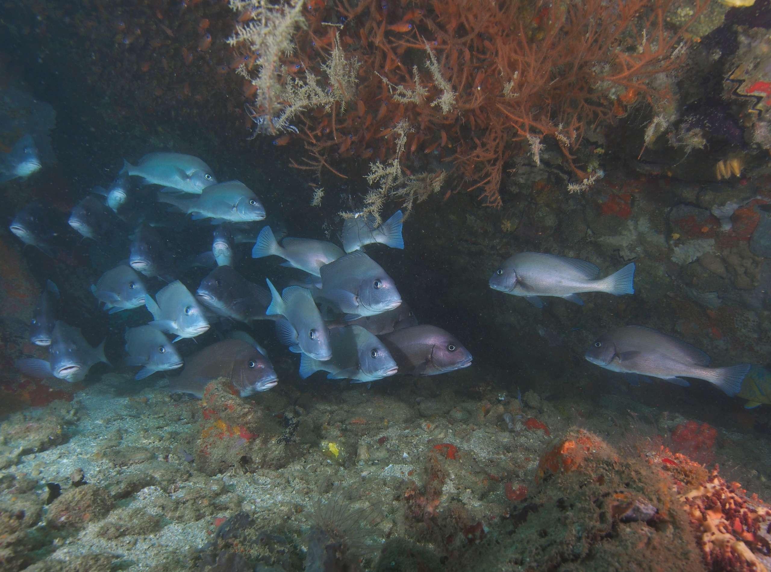 Des plongées variées en croisière a MADAGASCAR.