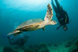 Croisière plongée 2020…MADAGASCAR