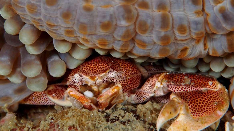 Des plongées 'macro' en croisière à MADAGASCAR.