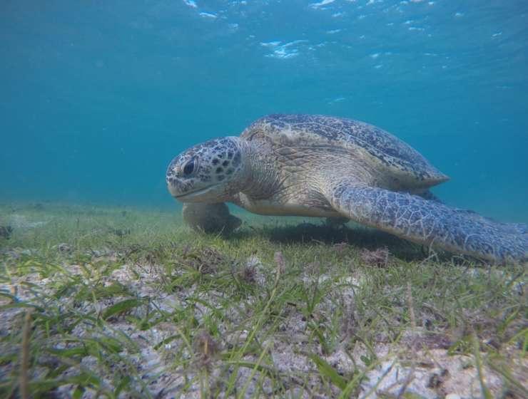 Les tortues de MADAGASCAR
